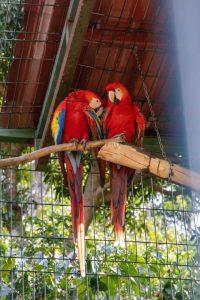 Parrots Bird Sanctuary Hacienda La Chimba