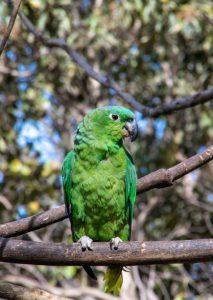 Bird Sanctuary Hacienda La Chimba